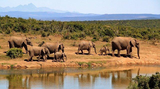 troupeau d'éléphants dans un safari au kenya