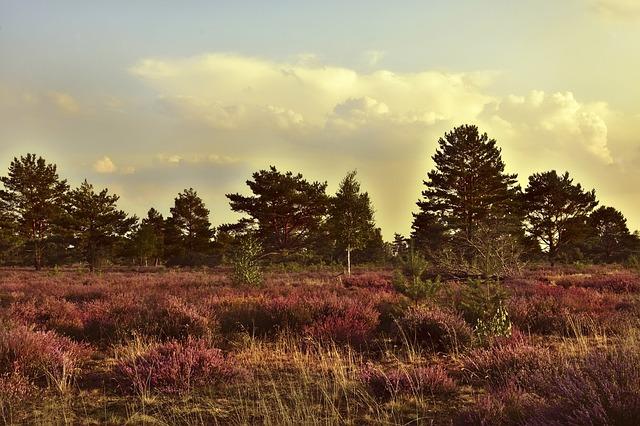 paysage dans les landes