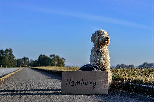chien qui voyage